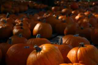 Herding Scaredy Cats – The Pumpkin Patch Incident