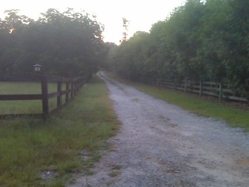 Morning Walk 20100727